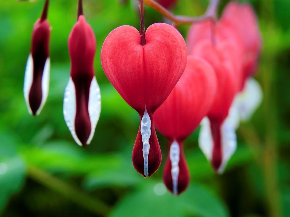 blossom-1425870_1920