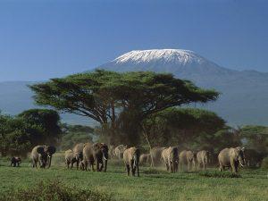 Amboseli National Park Kenya,Awesome Nature